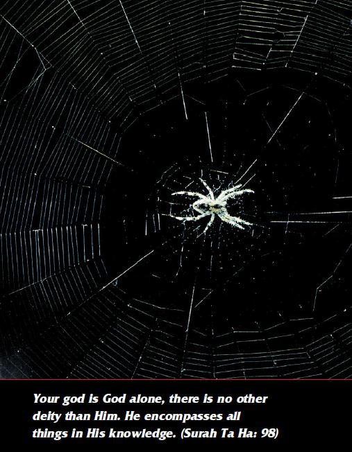 The House of the Spider / Scientific Miracles of the Quran