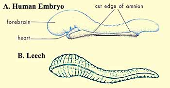 THE QURAN ON HUMAN EMBRYONIC DEVELOPMENT – The Scientific Miracles of The Holy Quran
